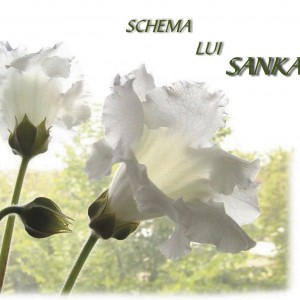 Schema lui Sankaran - Rajan Sankaran